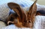 Jan. 22: Presentation about Bats in Eastsound (Rescheduled from Jan. 15)