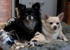 Pets of the Week:  Davenport and Ottoman