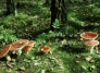 Oct. 21: The Wild Side Nature Series - The strange, often delicious world of local mushrooms