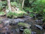 Stream corridor and salmon spawning habitat protected